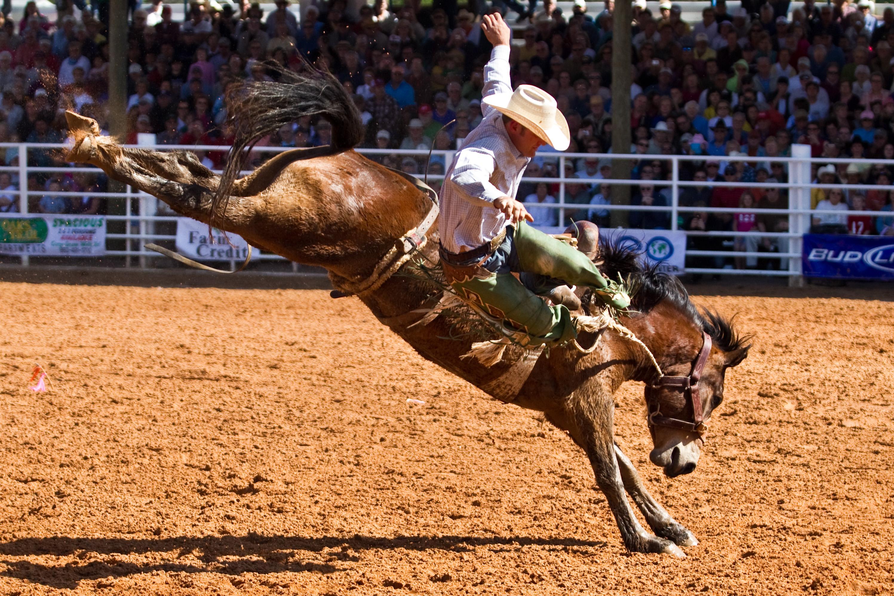 Arcadia Rodeo Desoto County FL 2017 Things to do visitdesoto.com bronc riding
